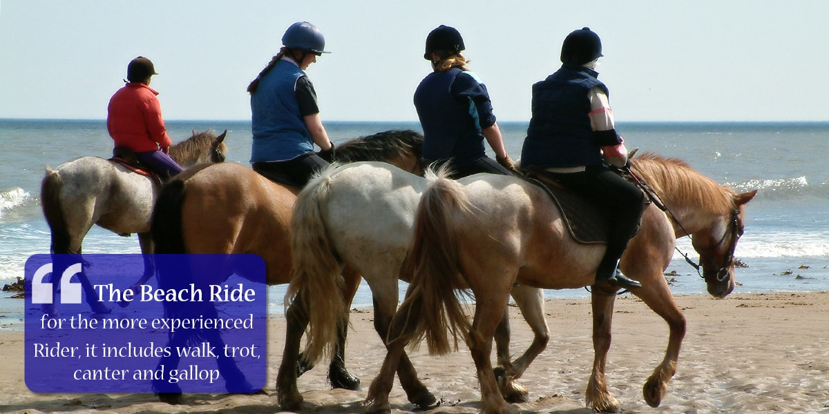 The beach ride is for the more experienced rider, it includes walk, trot, canter and gallop. Escorts always ride.